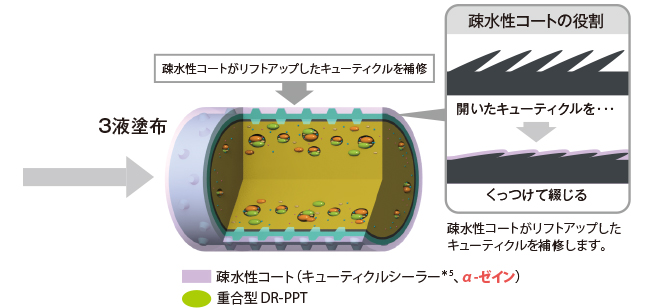 STEP3 疎水化   / しっかりと 「包みこむ」